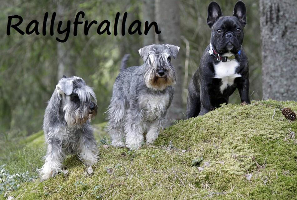 rallyfrallan